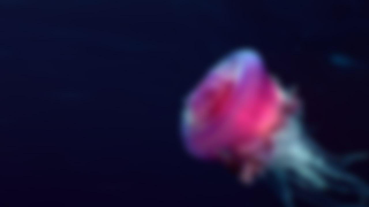 jellyfish-blur